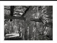black--widow slideshow-black -and- white